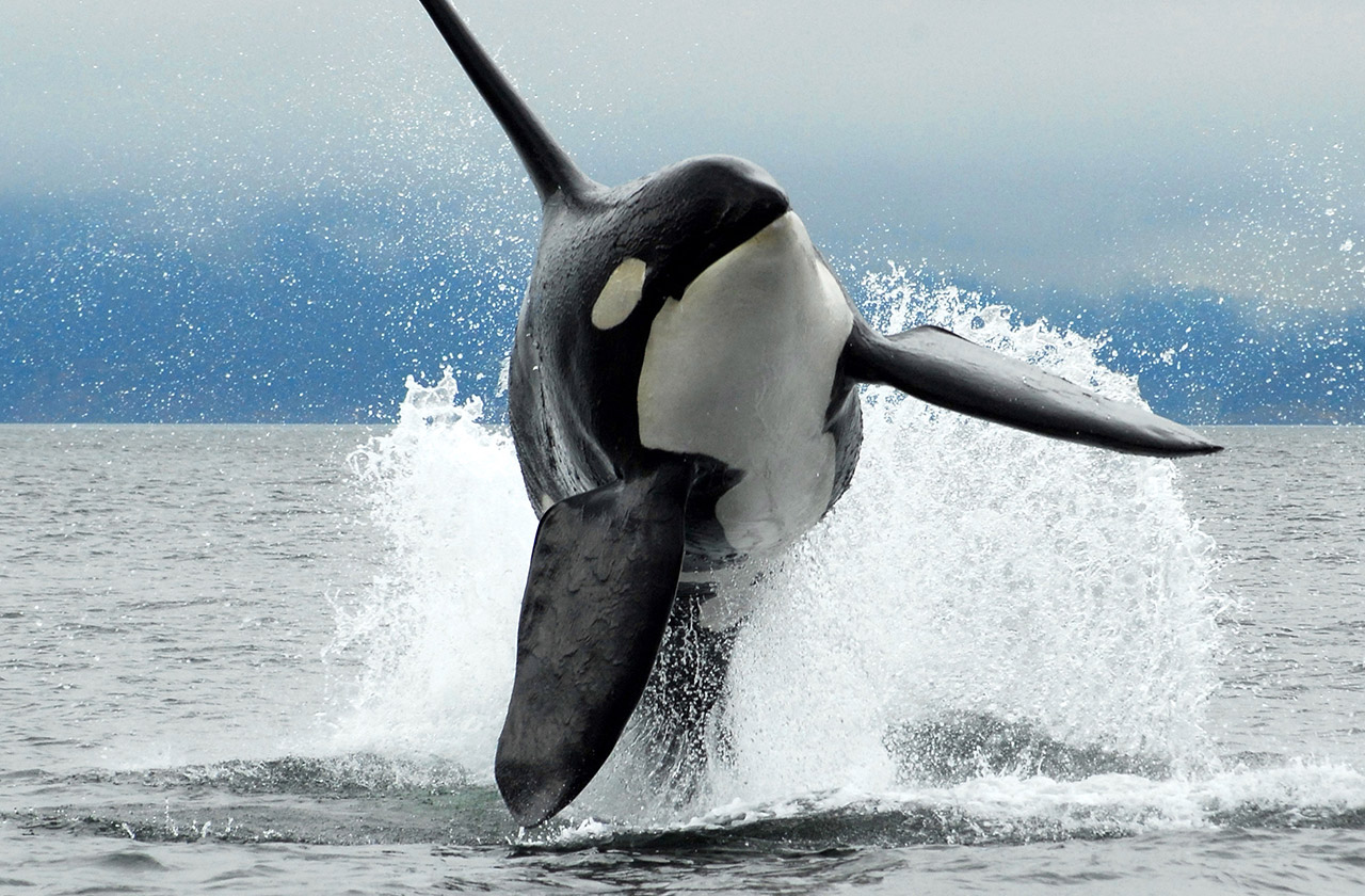 Vancouver Island, Whale Watching